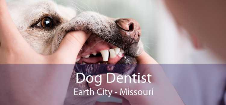 Dog Dentist Earth City - Missouri