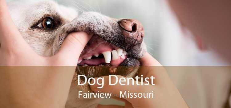 Dog Dentist Fairview - Missouri