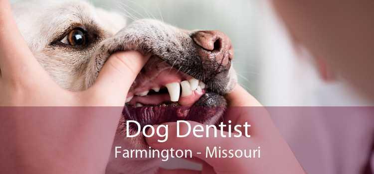 Dog Dentist Farmington - Missouri