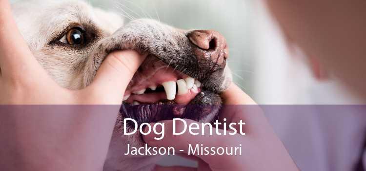 Dog Dentist Jackson - Missouri