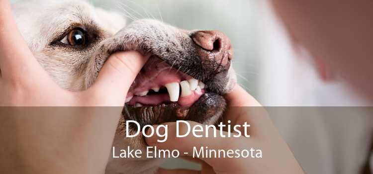 Dog Dentist Lake Elmo - Minnesota