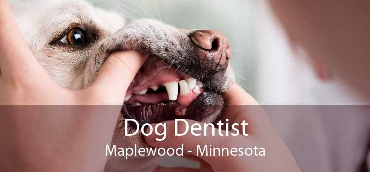 Dog Dentist Maplewood - Minnesota