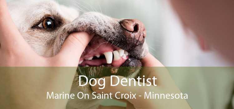 Dog Dentist Marine On Saint Croix - Minnesota