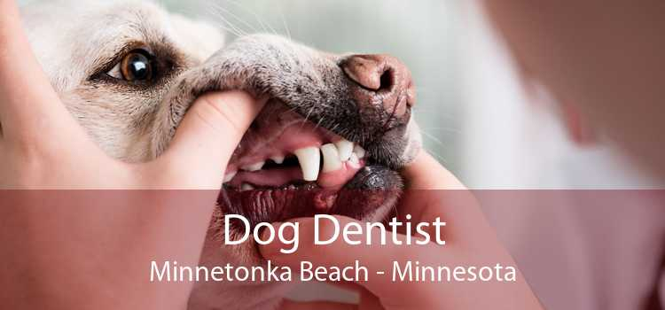 Dog Dentist Minnetonka Beach - Minnesota