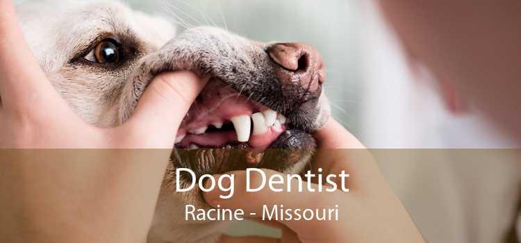 Dog Dentist Racine - Missouri