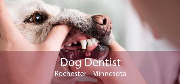 Dog Dentist Rochester - Minnesota