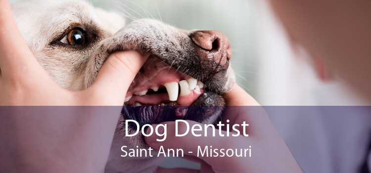 Dog Dentist Saint Ann - Missouri