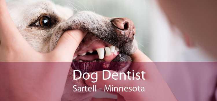 Dog Dentist Sartell - Minnesota
