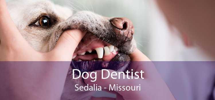 Dog Dentist Sedalia - Missouri