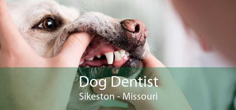 Dog Dentist Sikeston - Missouri