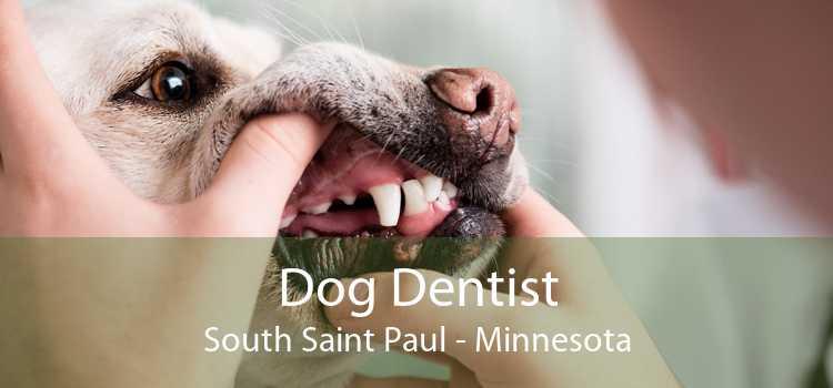 Dog Dentist South Saint Paul - Minnesota