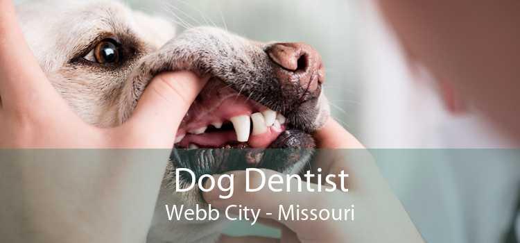 Dog Dentist Webb City - Missouri
