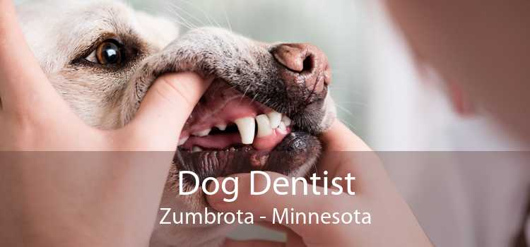 Dog Dentist Zumbrota - Minnesota