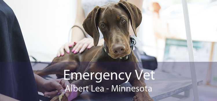 Emergency Vet Albert Lea - Minnesota