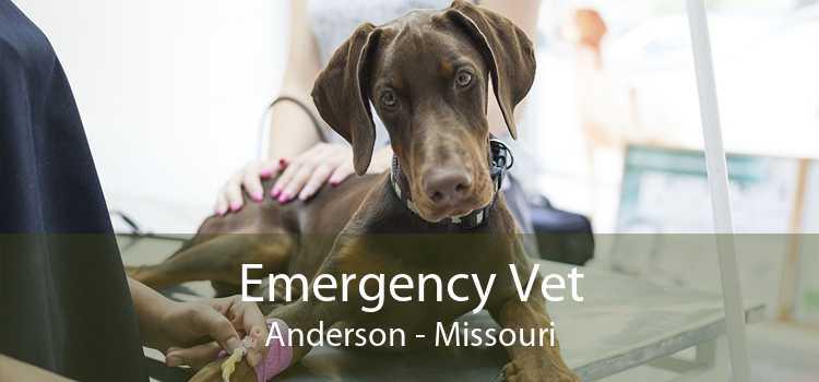 Emergency Vet Anderson - Missouri