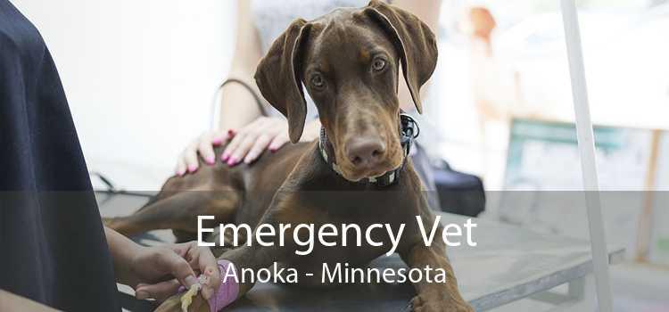 Emergency Vet Anoka - Minnesota