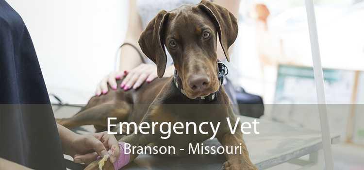 Emergency Vet Branson - Missouri