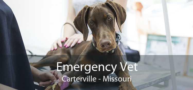 Emergency Vet Carterville - Missouri