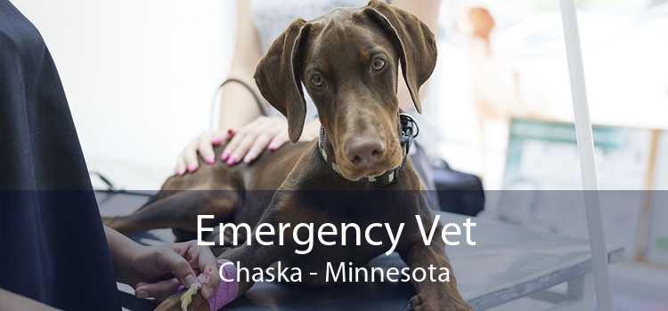 Emergency Vet Chaska - Minnesota