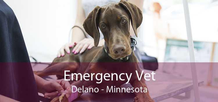 Emergency Vet Delano - Minnesota