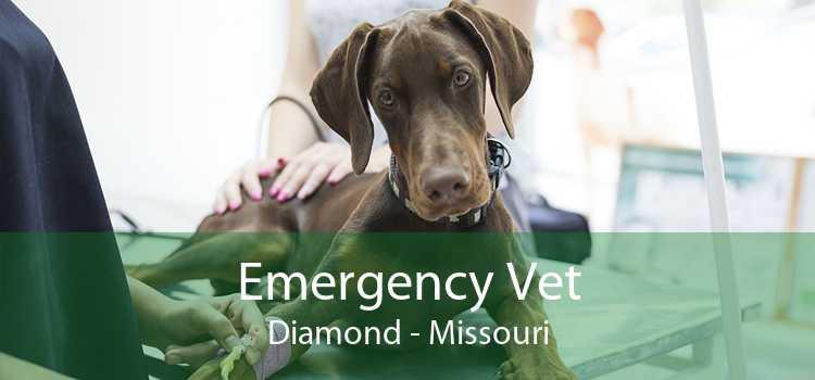 Emergency Vet Diamond - Missouri