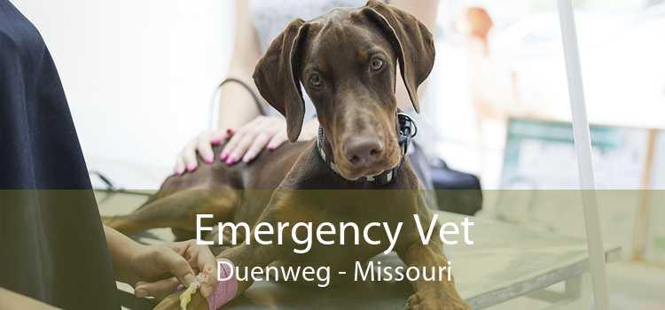 Emergency Vet Duenweg - Missouri