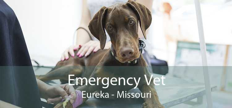 Emergency Vet Eureka - Missouri