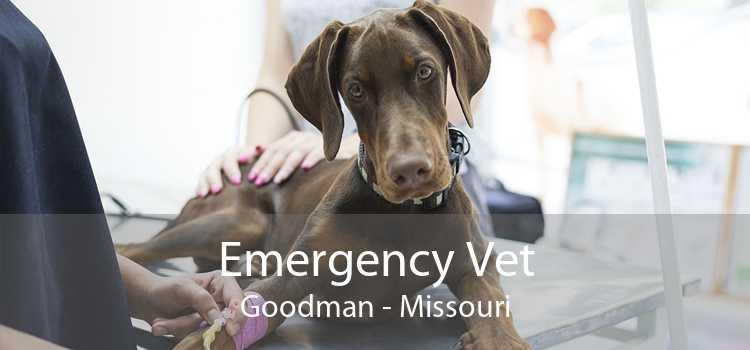 Emergency Vet Goodman - Missouri
