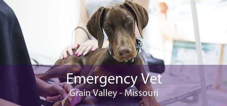 Emergency Vet Grain Valley - Missouri