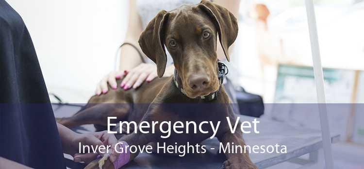 Emergency Vet Inver Grove Heights - Minnesota