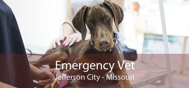 Emergency Vet Jefferson City - Missouri