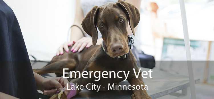 Emergency Vet Lake City - Minnesota