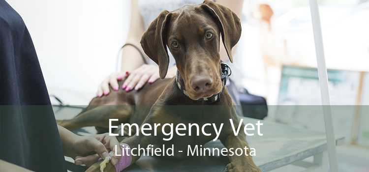 Emergency Vet Litchfield - Minnesota