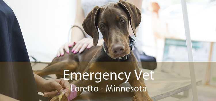 Emergency Vet Loretto - Minnesota