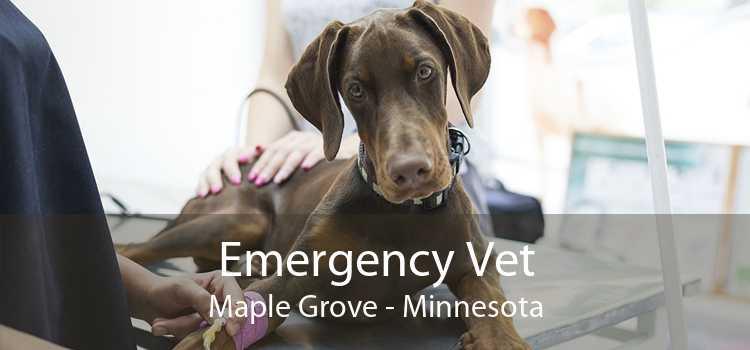 Emergency Vet Maple Grove - Minnesota