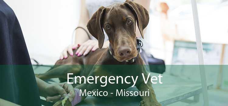 Emergency Vet Mexico - Missouri