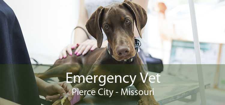 Emergency Vet Pierce City - Missouri