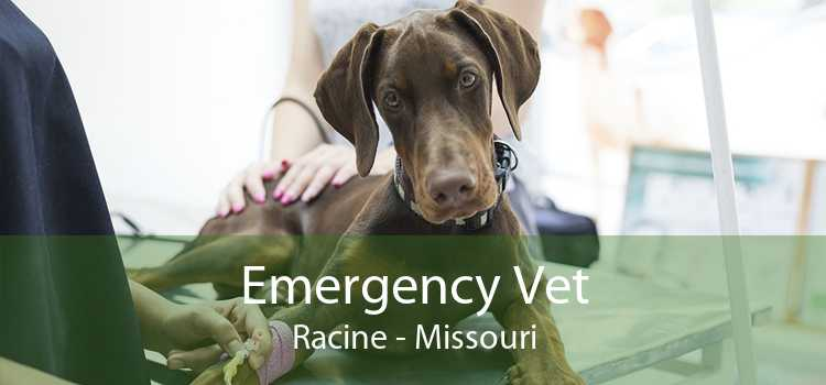 Emergency Vet Racine - Missouri
