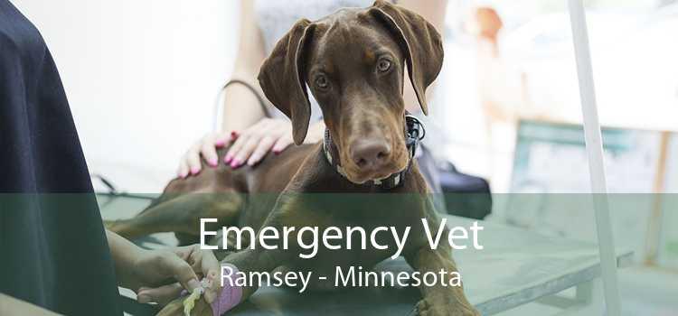 Emergency Vet Ramsey - Minnesota