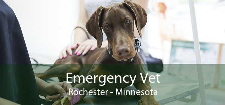 Emergency Vet Rochester - Minnesota