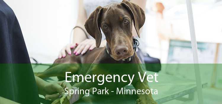Emergency Vet Spring Park - Minnesota
