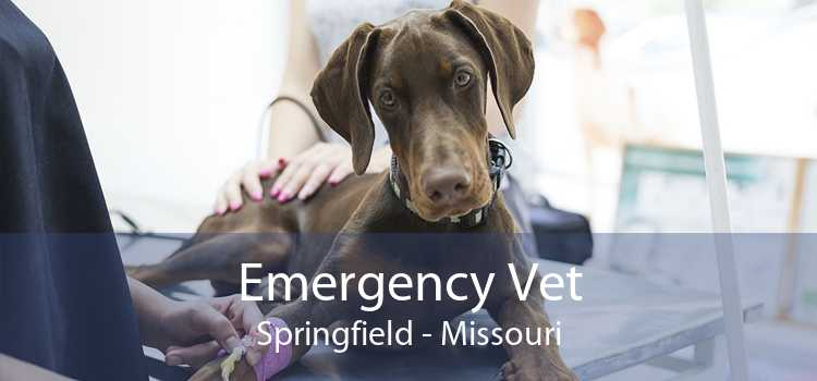 Emergency Vet Springfield - Missouri