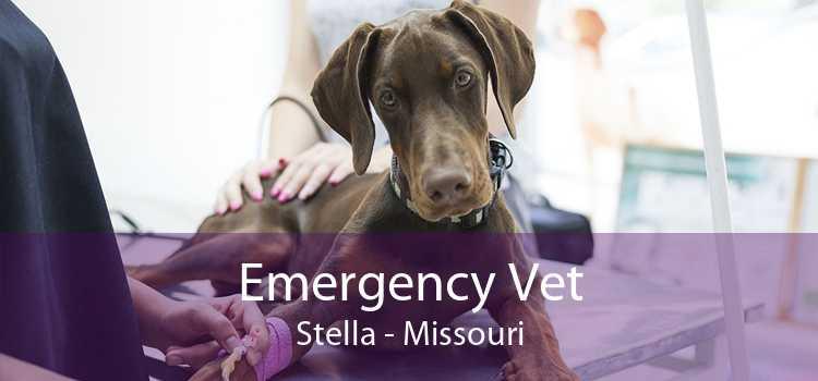 Emergency Vet Stella - Missouri