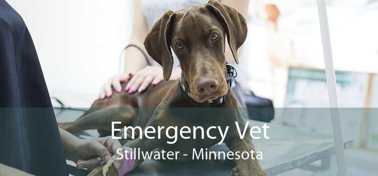 Emergency Vet Stillwater - Minnesota