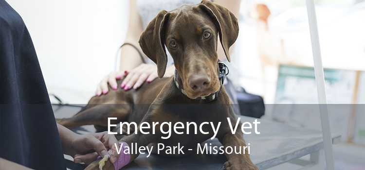 Emergency Vet Valley Park - Missouri