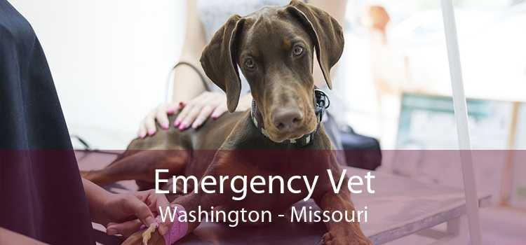 Emergency Vet Washington - Missouri