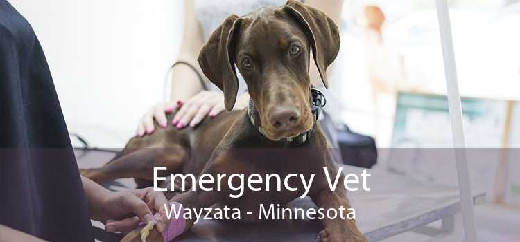 Emergency Vet Wayzata - Minnesota