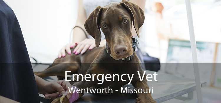 Emergency Vet Wentworth - Missouri