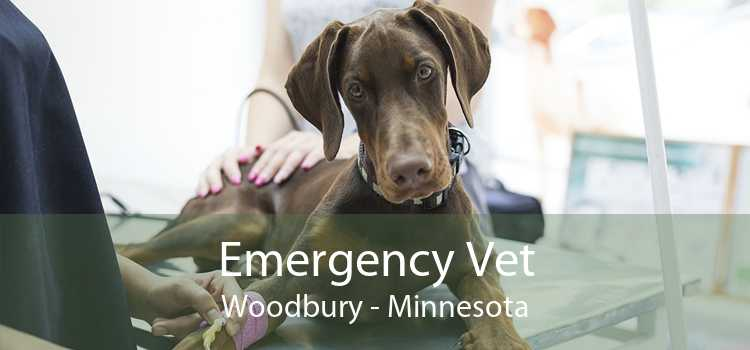 Emergency Vet Woodbury - Minnesota