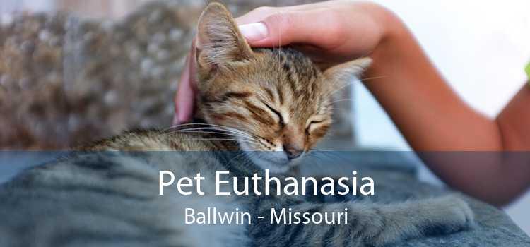 Pet Euthanasia Ballwin - Missouri